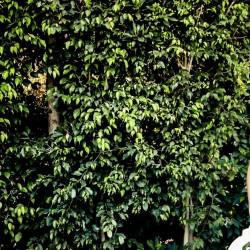 إي آي إي للتصوير-التصوير الفوتوغرافي والفيديو-القاهرة-1