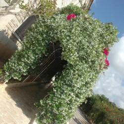 جاردانيا جاردن-الحدائق والنوادي-بيروت-5