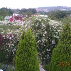 جاردانيا جاردن-الحدائق والنوادي-بيروت-2