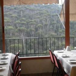 مطعم جنة الصنوبر-المطاعم-بيروت-2