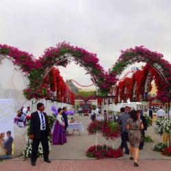 ميراكل غاردن دبي-الحدائق والنوادي-دبي-3