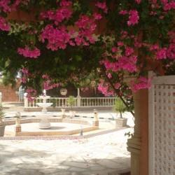 دار بن سالم-الحدائق والنوادي-مدينة تونس-1