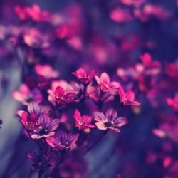 أل إن بلوم-زهور الزفاف-الدار البيضاء-2