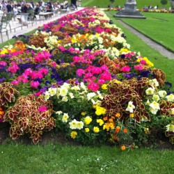 جاردن سوكري-زهور الزفاف-الرباط-2