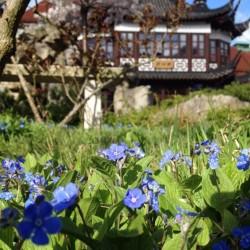 Chinesisches Teehaus Yu Garden-Besondere Hochzeitslocation-Hamburg-4