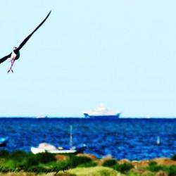 Mourad Chaari Photography-Photographes-Sfax-5