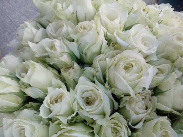 زهور الفرح - زهور الزفاف - صفاقس