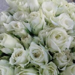زهور الفرح-زهور الزفاف-صفاقس-1