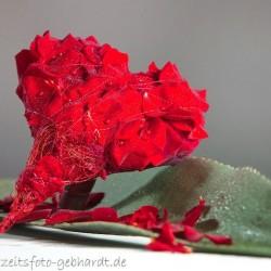 ARBES-GEBHARDT - HOCHZEITSFOTOGRAFIE-Hochzeitsfotograf-München-6