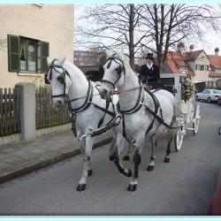 Kutscherei Hans Holzmann-Hochzeitsautos-München-3