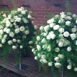 Blumen Wind-Hochzeitsblumen und Blumensträuße-Köln-5