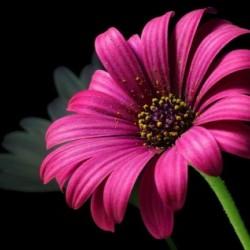 رامي للازهار-زهور الزفاف-دبي-4