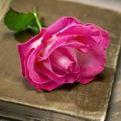 رامي للازهار-زهور الزفاف-دبي-3