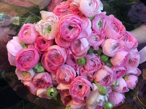 Blumen Stelter - Hochzeitsblumen und Blumensträuße - Bremen