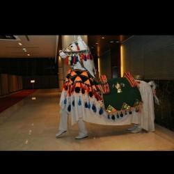 نجوم الزفة المصريه-زفات و دي جي-مدينة الكويت-6