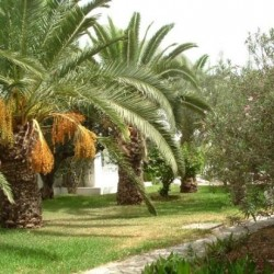 Le Hammamet Hotel-Hôtels-Tunis-3