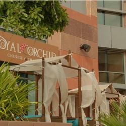 رويال اوركيد-المطاعم-دبي-3