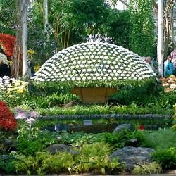 حديقة رافلز النباتية-الحدائق والنوادي-دبي-1