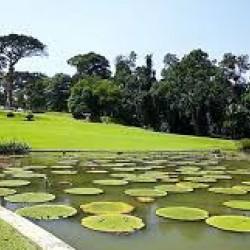 حديقة رافلز النباتية-الحدائق والنوادي-دبي-2
