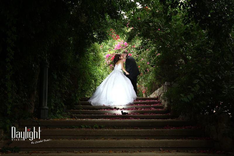 دي لايت - التصوير الفوتوغرافي والفيديو - بيروت