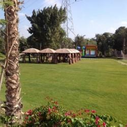 منصورية بارك-الحدائق والنوادي-القاهرة-2