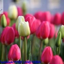 روز لاند-زهور الزفاف-دبي-2