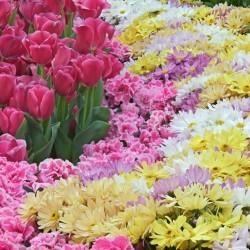 روز لاند-زهور الزفاف-دبي-5