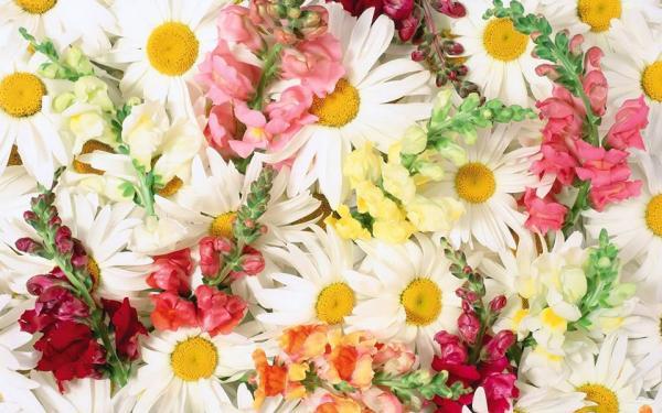 ابسكيل اند بوش - زهور الزفاف - دبي