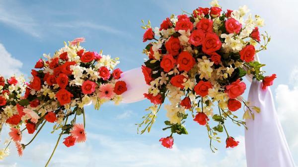 أزهار فينوس - زهور الزفاف - أبوظبي
