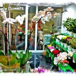 روز تشارمز-زهور الزفاف-دبي-4
