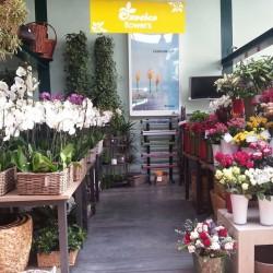 ايكزوتيكا-زهور الزفاف-أبوظبي-3