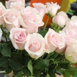 بامبينو فلاورز-زهور الزفاف-دبي-1