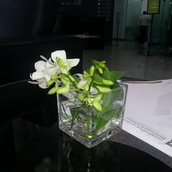 توشكي فلورز -زهور الزفاف-القاهرة-6