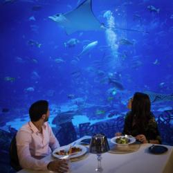فندق نوفوتيل دبي البرشا-الفنادق-دبي-6