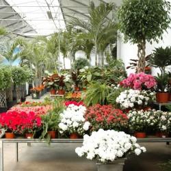 ايكزوتيكا-زهور الزفاف-بيروت-3