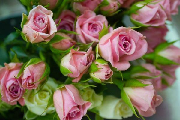 ازهار منيرة - زهور الزفاف - مدينة الكويت
