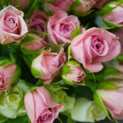 ازهار منيرة-زهور الزفاف-مدينة الكويت-1