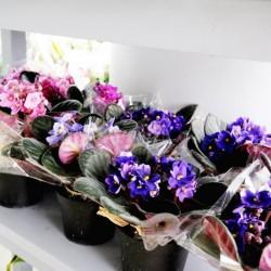 فنان فلاورز-زهور الزفاف-أبوظبي-3