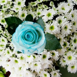 فنان فلاورز-زهور الزفاف-أبوظبي-6