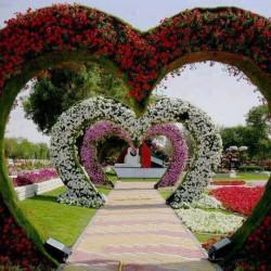 زهور معز-زهور الزفاف-مدينة تونس-5
