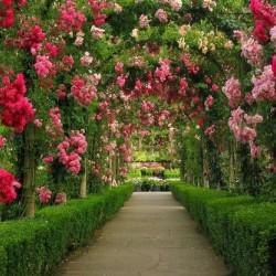 مادري ناتورا-زهور الزفاف-مدينة تونس-4