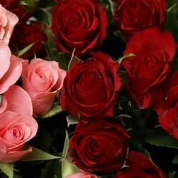 Fleurs de luxe-Fleurs et bouquets de mariage-Tunis-1