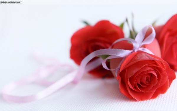 كلاهما أرجواني - زهور الزفاف - الدار البيضاء