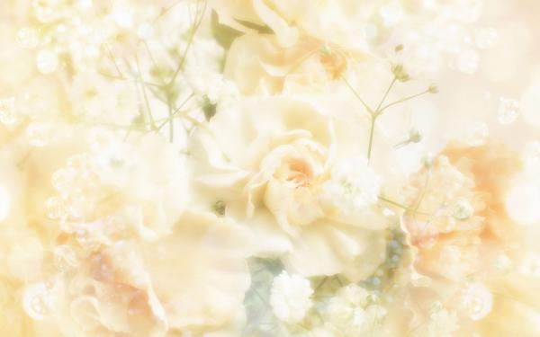 زهرة جميل - زهور الزفاف - الدار البيضاء