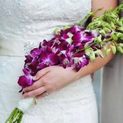 أورخيديا الأنشاء-زهور الزفاف-الرباط-1
